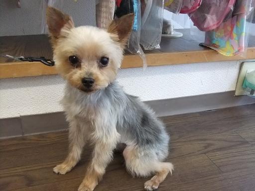 2011_0907保護犬0171