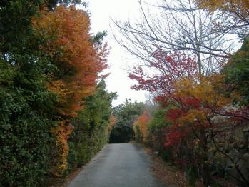 20111215kaiganjikouyou2.jpg