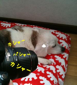1_20110517145052.jpg