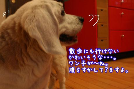 3_20110511193500.jpg