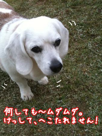 3_20110515182453.jpg