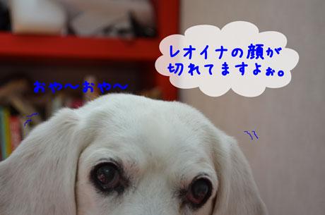 3_20110517145051.jpg