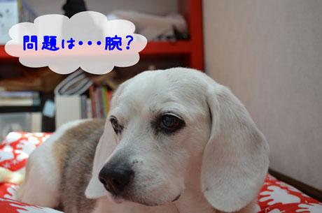 4_20110517145051.jpg