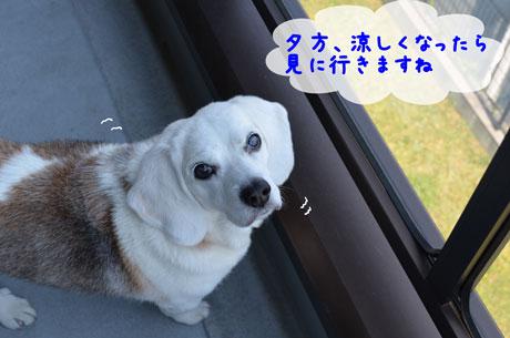4_20110518145854.jpg