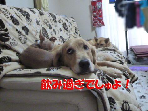 a_20111013070707.jpg