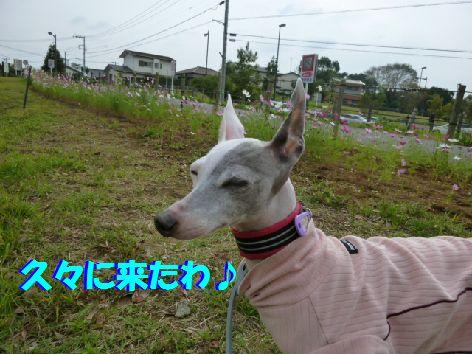 a_20111021063710.jpg