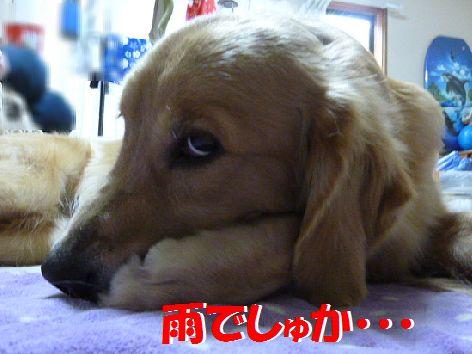 a_20111022100858.jpg
