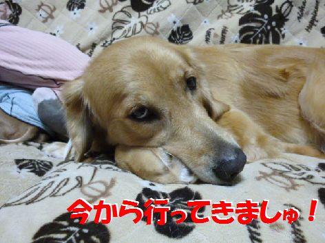 a_20111023055201.jpg