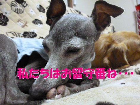 b_20111023055201.jpg