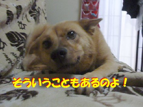 c_20111013070706.jpg