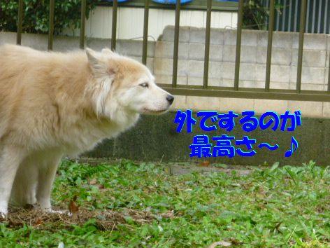 c_20111017064342.jpg