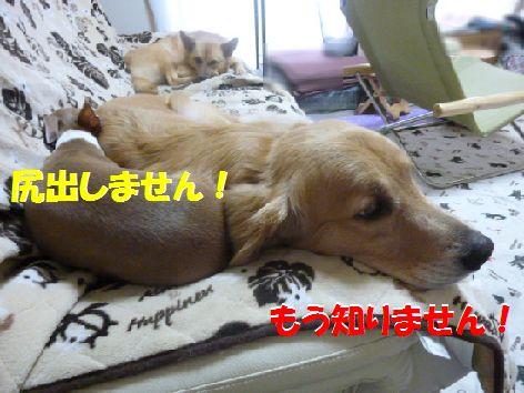 d_20111013070706.jpg