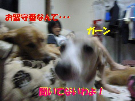 d_20111015095403.jpg
