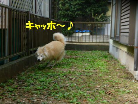 d_20111017064342.jpg