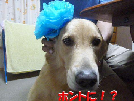 d_20111022100857.jpg