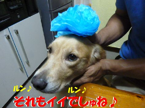 e_20111022100857.jpg