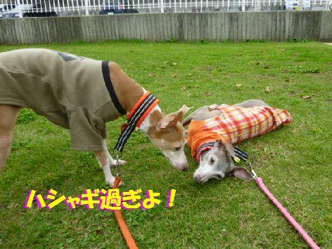 f_20111014070055.jpg