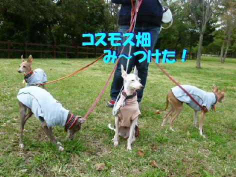 f_20111021063710.jpg
