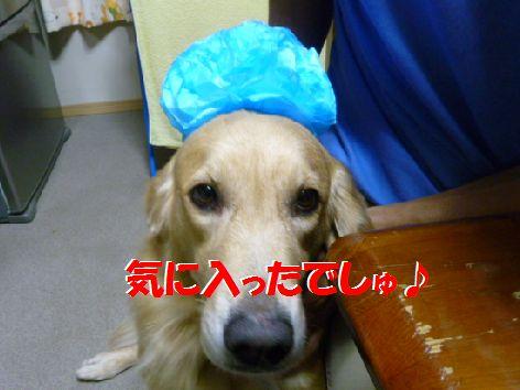 f_20111022100911.jpg