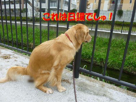 h_20111014070109.jpg