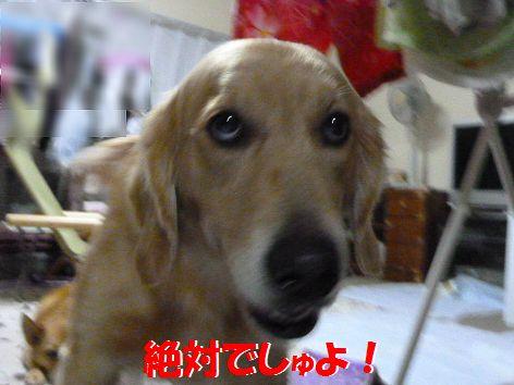 i_20111021063725.jpg