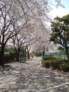 野球場側の桜