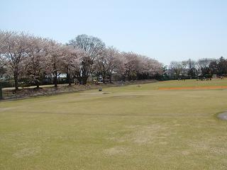 練習風景と桜