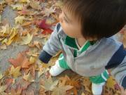 初めて落ち葉を踏んだよ