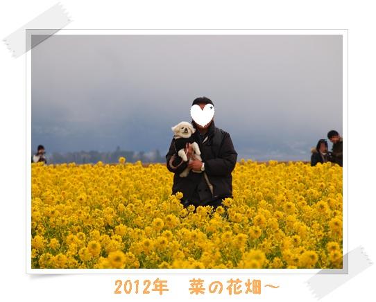 2012菜の花 R-11