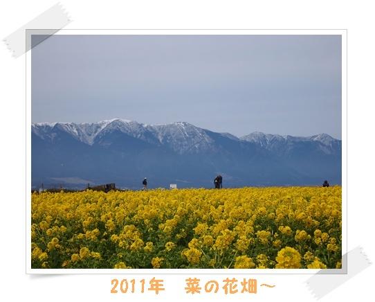 112019菜の花 R-1