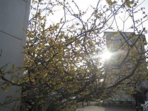 20080304-13.jpg