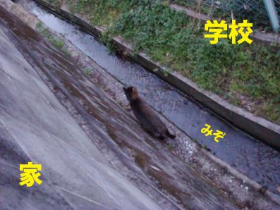 riki03-05-03.jpg