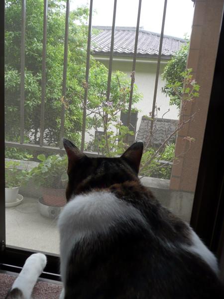 110517_rikimaru2.jpg