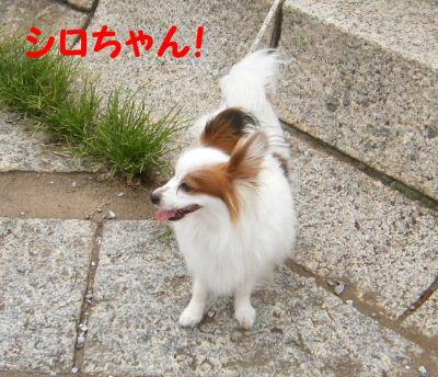 2006_06300071.jpg