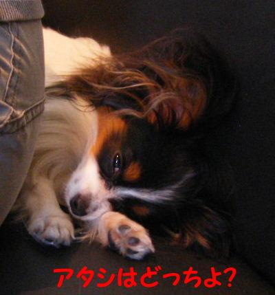 2006_06300082.jpg