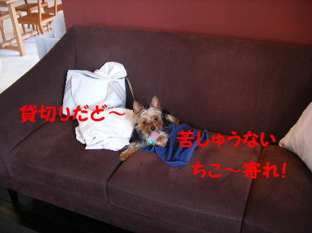 2006_07120002.jpg
