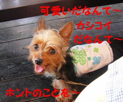 2006_07120011.jpg