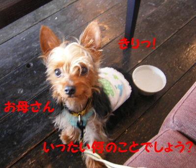 2006_07120019.jpg