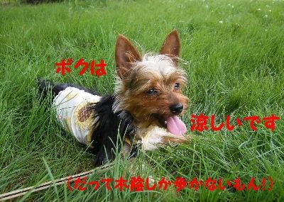 2006_07130003.jpg