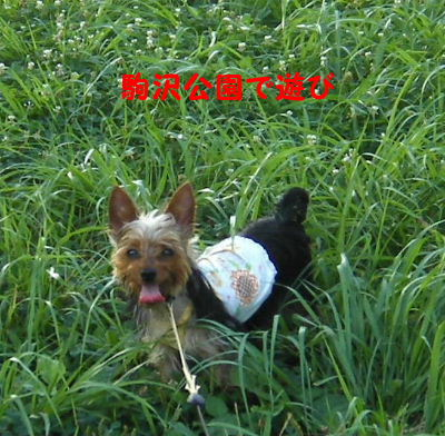 2006_07290002.jpg