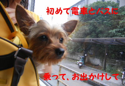 2006_07290138.jpg