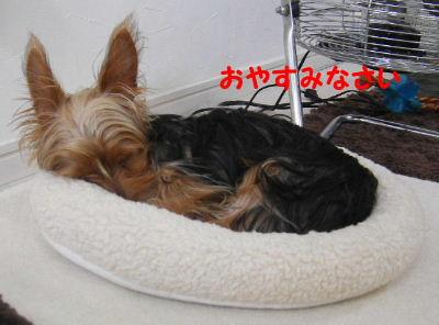 2006_09160020.jpg