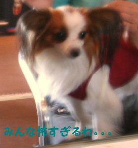 2006_11240008.jpg