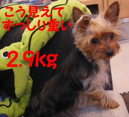2007_01210012.jpg