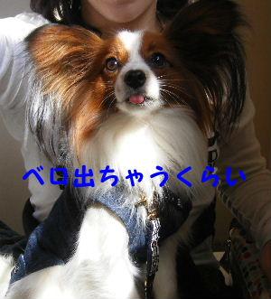 2007_04140030.jpg