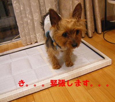 2007_04140037.jpg