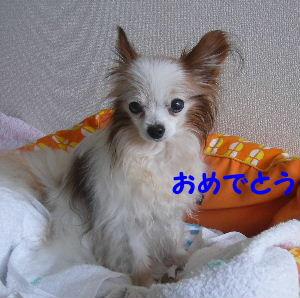 2007_06060001.jpg