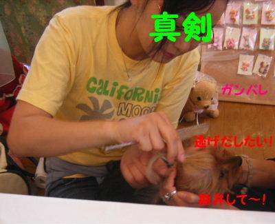 2007_06090004.jpg