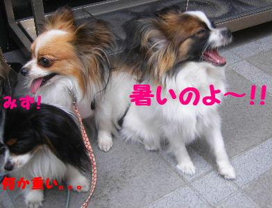 2007_06130002.jpg