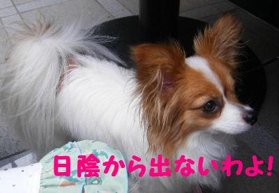2007_06130003.jpg